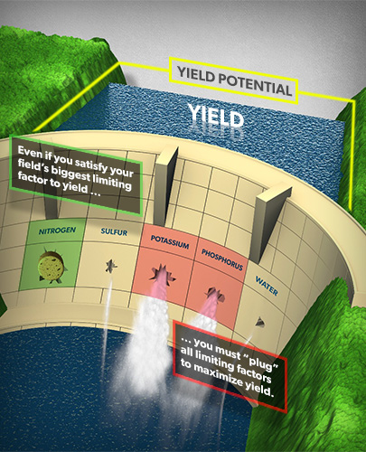 If all nutrients aren't supplied to 100% sufficiency, yields will be lost.