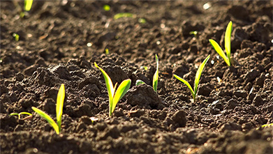 Three Lesser-known Advantages Of Starter Fertilizers