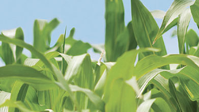 Top Agronomic Recommendations Ag Retailers Should Keep in Mind