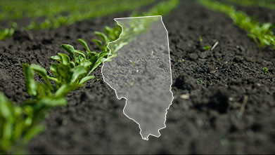 Back to Basics: Details Matter for Productive Soils