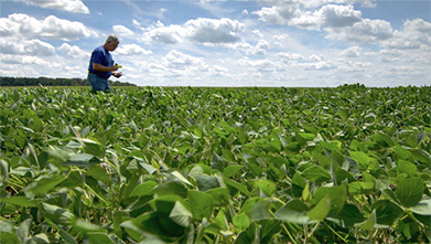 Ohio Certified Crop Adviser seeing K-deficient fields firsthand