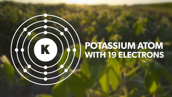 Potassium: The Overlooked Nutrient in Crop Production