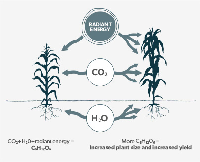Radiant energy CO2 H2O CO2+H2O+radiant energy = C6H12O6  More C6H12O6 = Increased plant size and increased yield